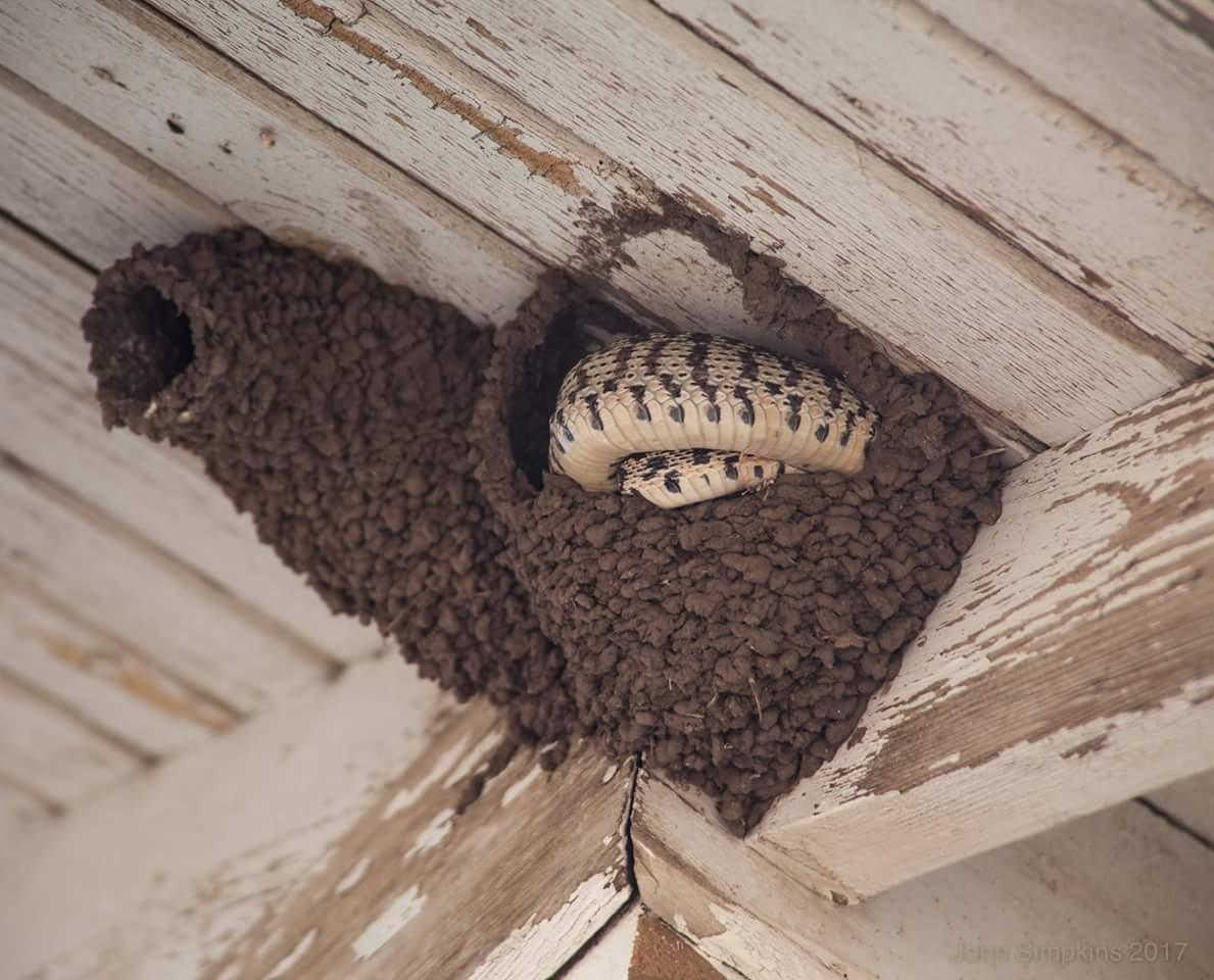 Как избавиться от пчел в частном доме - веселый дом