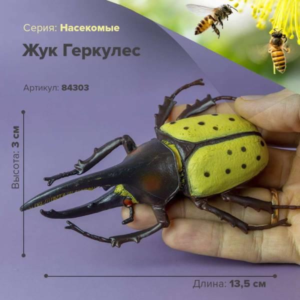 50  интересных  фактов о жуках для любознательных — общенет
