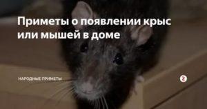 Зоофобия (zoophobia): как называется боязнь того или иного животного, причины и проявления расстройства