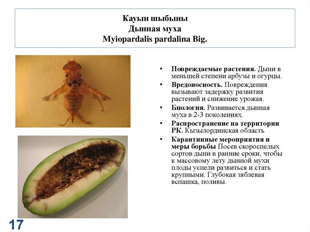 Муха цеце: описание и особенности, разновидности, среда обитания, питание, размножение, симптомы сонной болезни