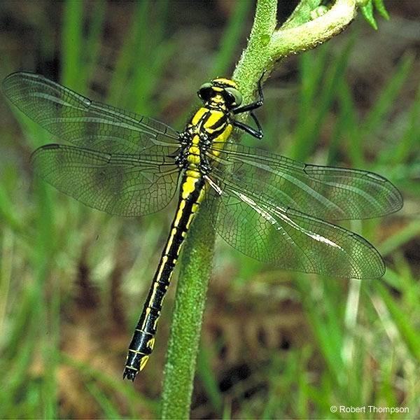 Дикобраз – описание, виды, чем питается, где живет, фото и видео