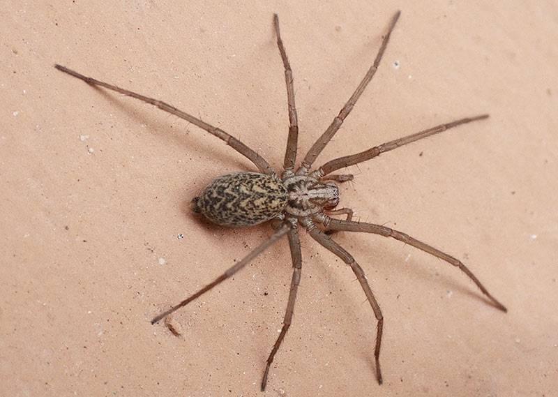 Сколько ног у паука: зачем пауку 8 ног, функции