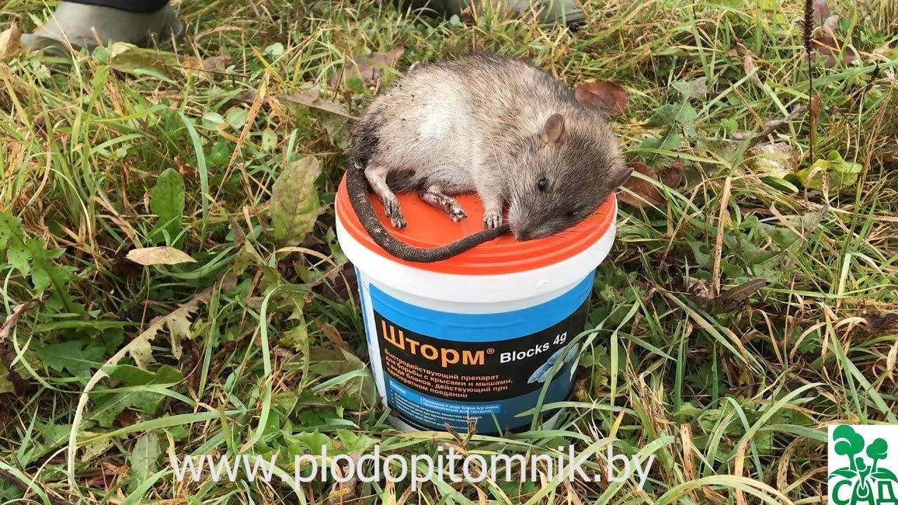 Какие опасные для человека болезни переносят мыши?