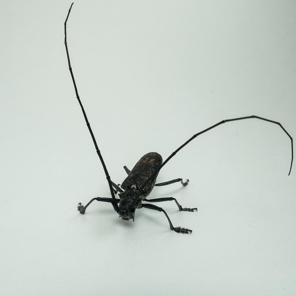 Уничтожение жуков древоточцев: химические препараты и народны методы