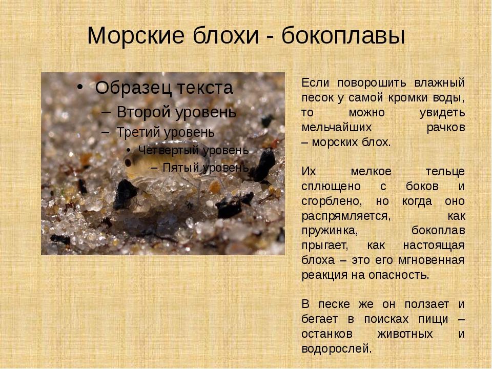На азовском море нашествие медуз и блох, которые больно жалят. в чем причина и когда вода очистится
