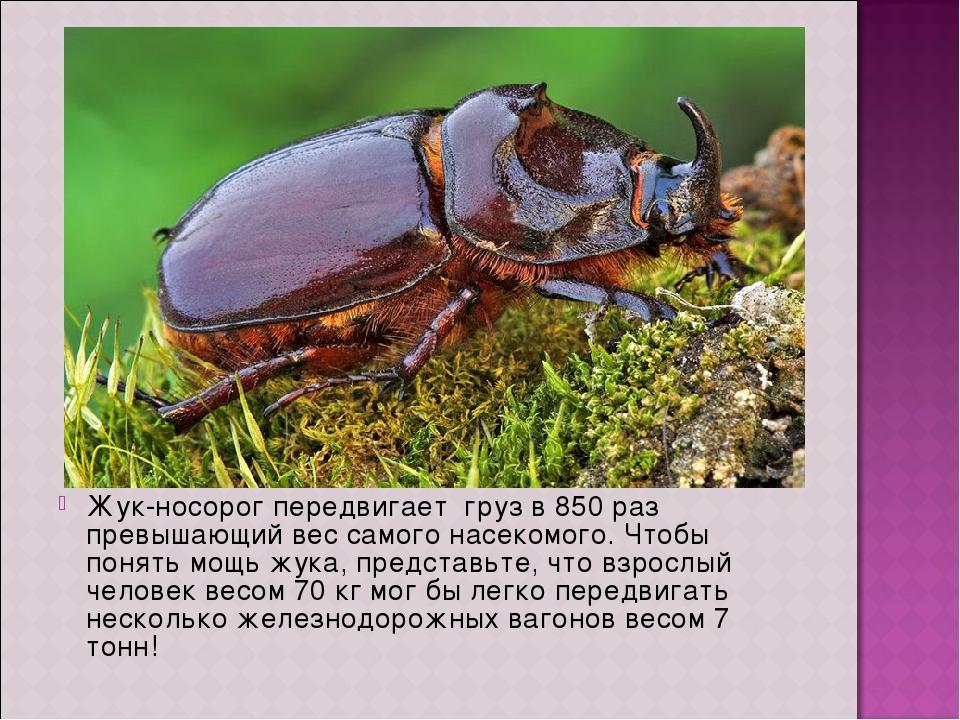 Жук навозник насекомое. описание, особенности, виды, образ жизни и среда обитания навозника | живность.ру