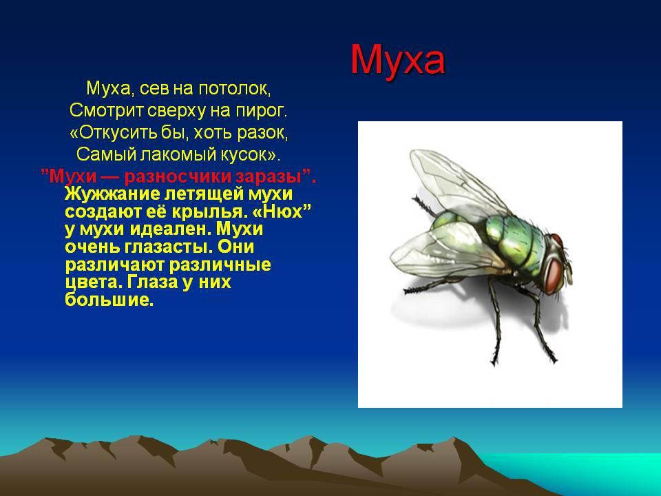 Ученые разобрались, почему муха не падает с потолка. почему муха не падает с потолка? почему пауки не падают с потолка