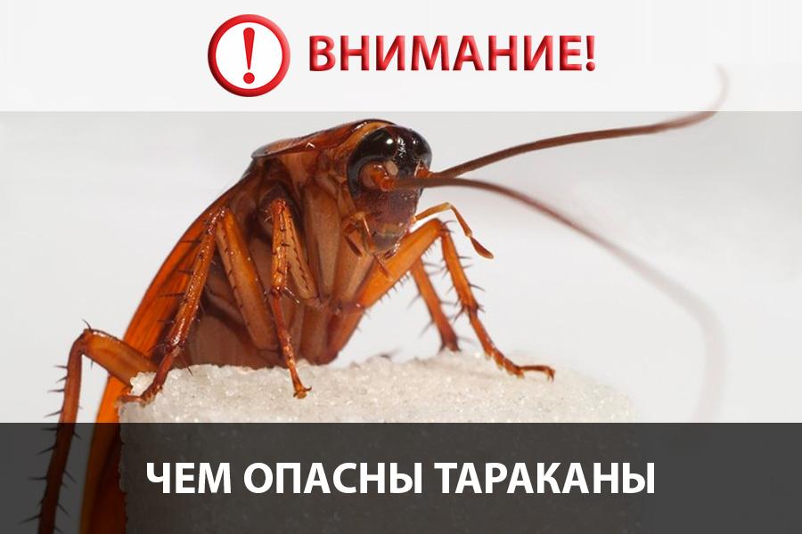 Переносчиками каких болезней являются тараканы