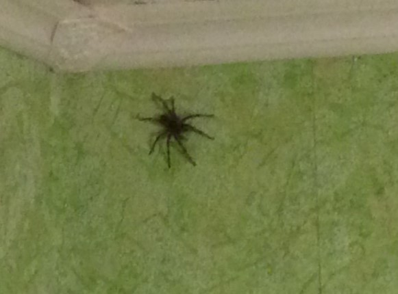Как избавиться от пауков в квартире и доме, в домашних условиях самостоятельно, народными средствами