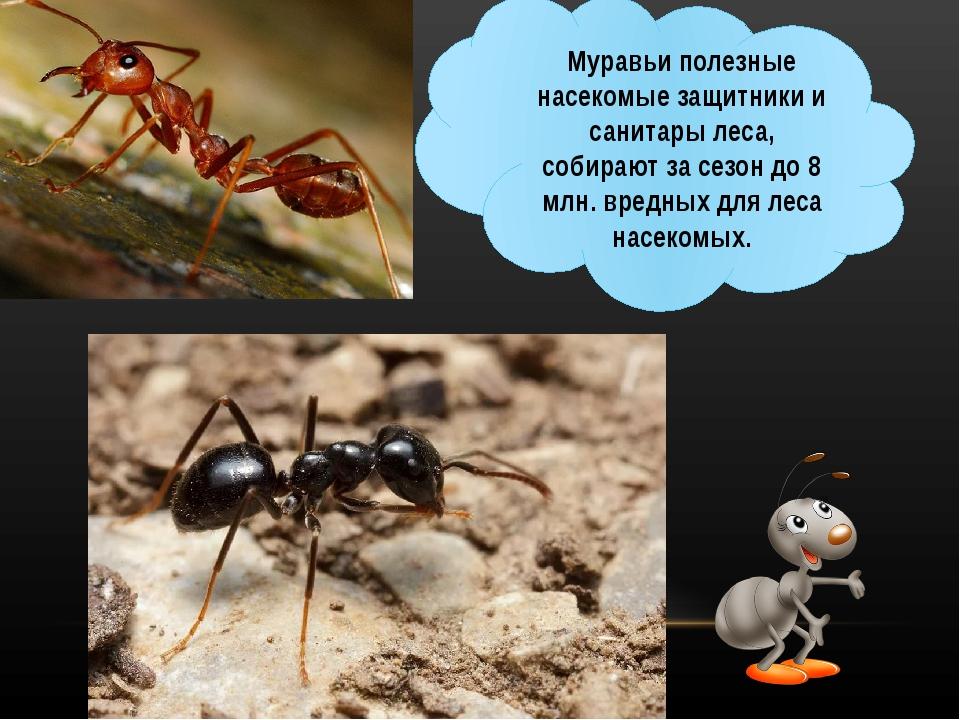 Зачем нужны муравьи?
