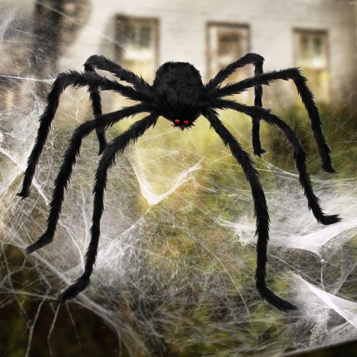 Самые красивые пауки в мире — топ 10