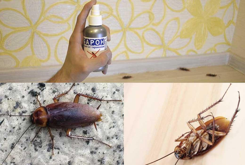 Агран от тараканов - инструкция по применению средства, отзывы