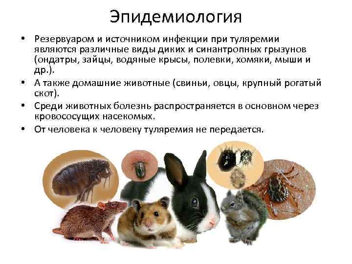 Болезни переносимые грызунами, опасные для человека и животных - симптомы, лечение, препараты, причины появления | наши лучшие друзья