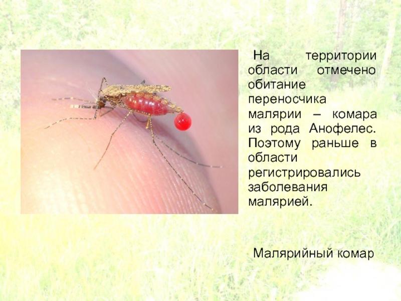 Что будет, если укусит малярийный комар?