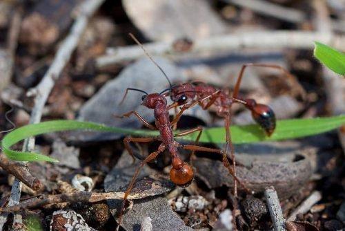 Как бороться с муравьями на цветах: методы борьбы на клумбе и в горшках