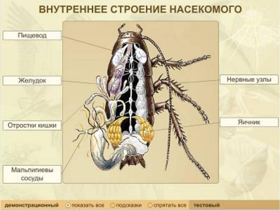 Особенности строения таракана секрет живучести раскрыт