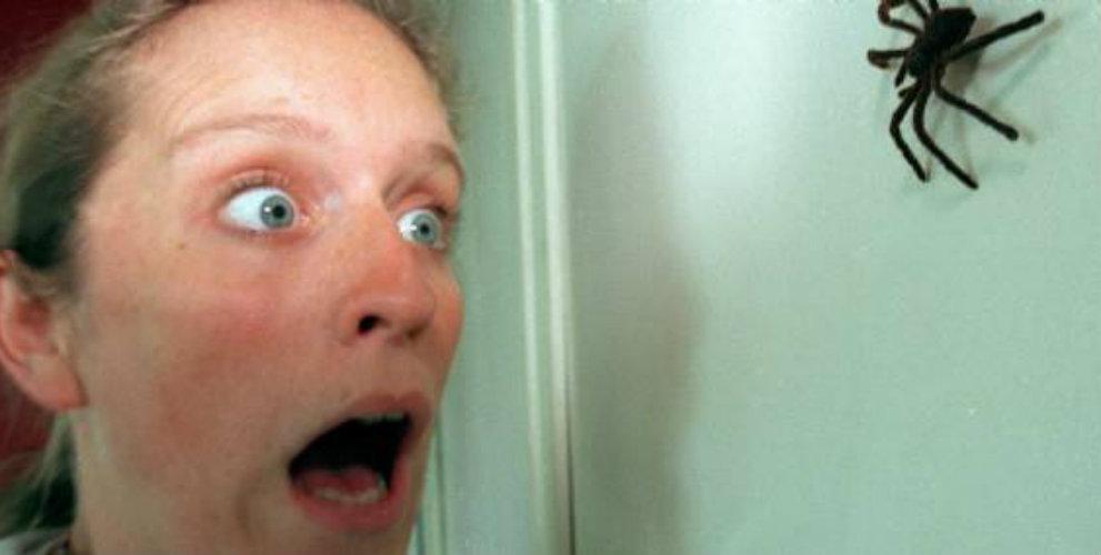 Арахнофобия: почему возникает боязнь и как избавиться от страха пауков?