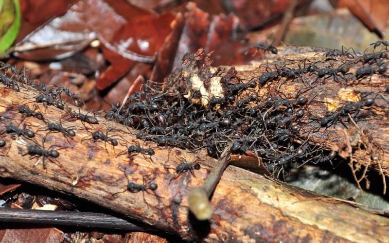 Избавляемся от муравьев на участке в два счета — лучшие методы