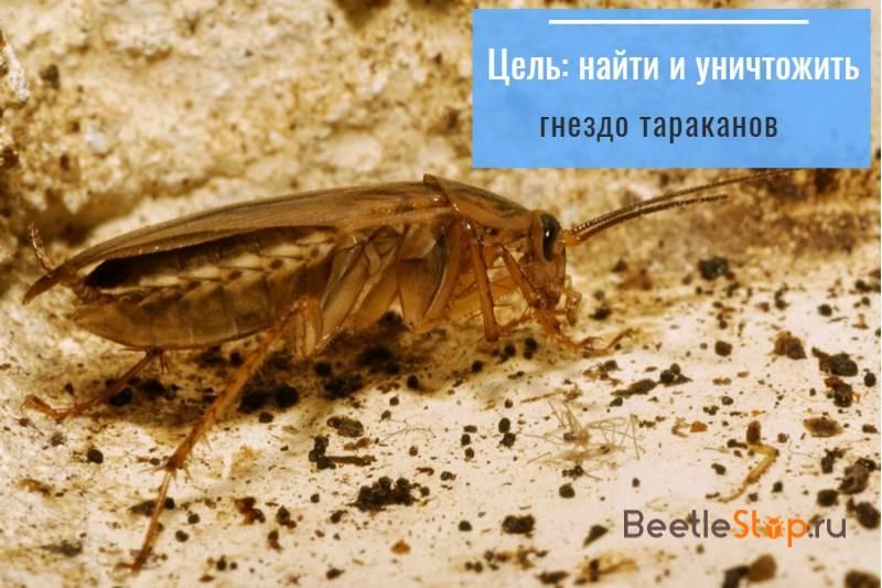 Белые тараканы в квартире: что это, бывают ли домашние прусаки белыми?