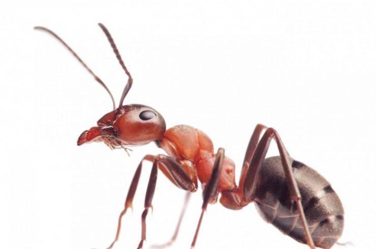 Муравьед животное. описание, особенности, виды, образ жизни и среда обитания муравьеда   живность.ру