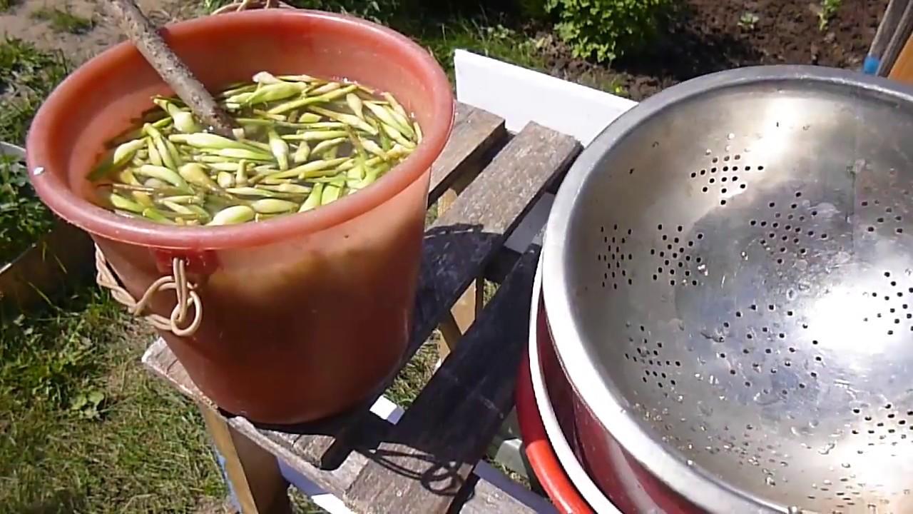Настои чеснока от вредителей | во саду и в огороде