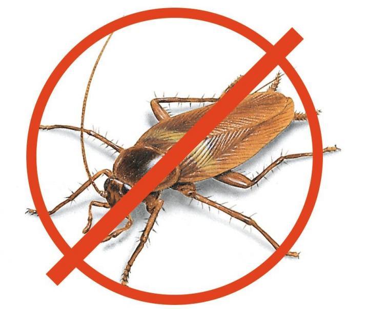 Народные средства избавления от тараканов в квартире