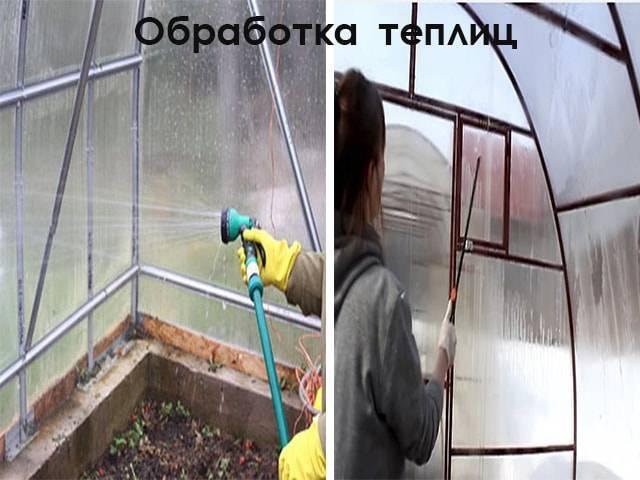 Белокрылка в теплице: как избавиться от коварного вредителя