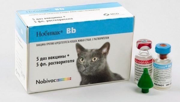 """Профилактические прививки для кошек, виды вакцинации и сроки проведения   блог ветклиники """"беланта"""""""
