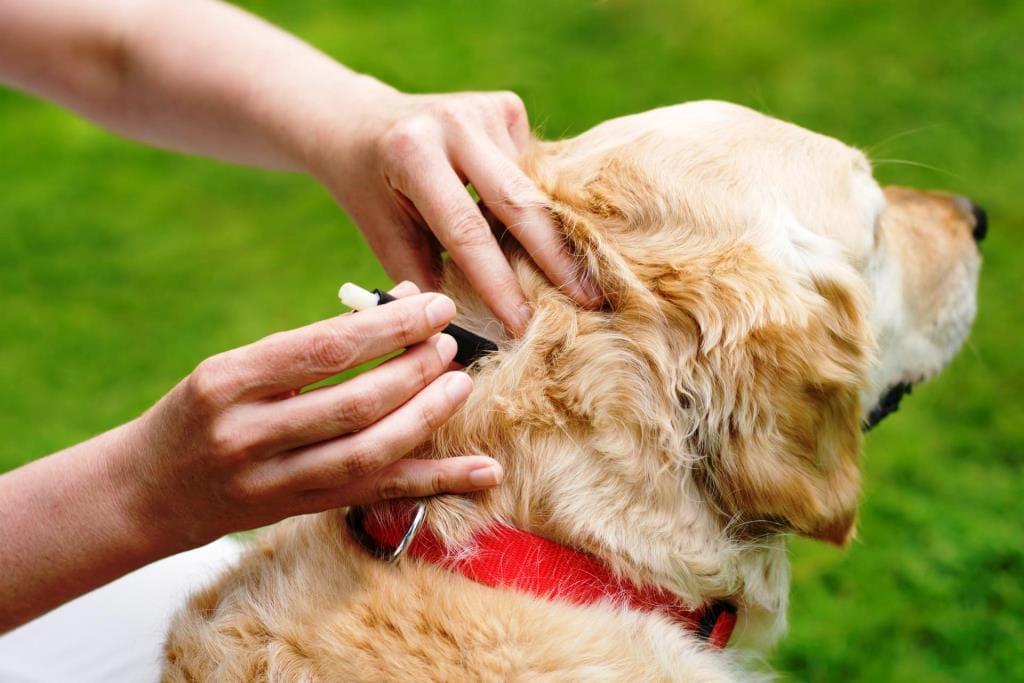 Как избавить домашнее животное от блох- лечение собак и кошек