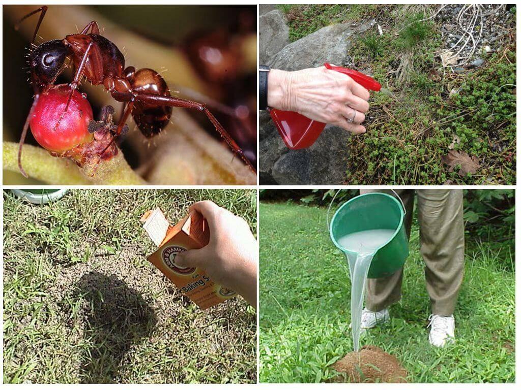 Как навсегда избавиться от муравьев в квартире, огороде и саду: эффективные способы борьбы, борная кислота, мыло, уксус, спреи, гели,ловушки