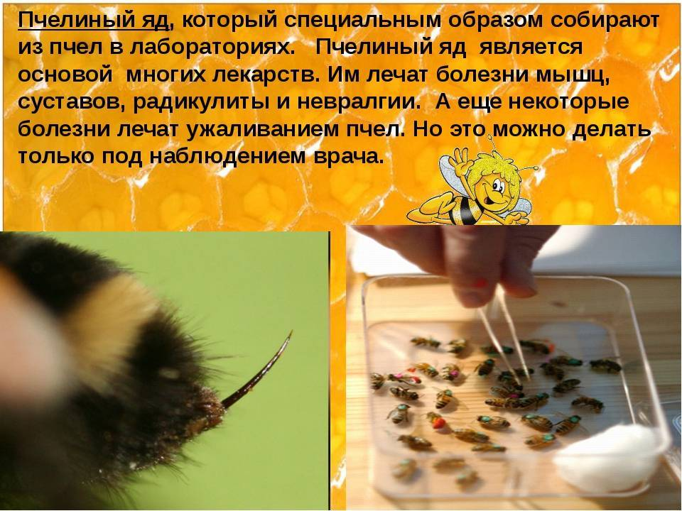 Пчелиный яд: состав, полезные свойства, действие на организм апитоксина