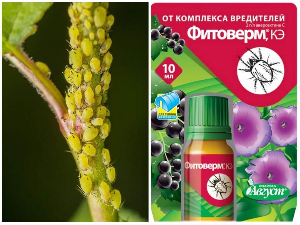 Топ-10 лучших инсектицидов для сада и огорода