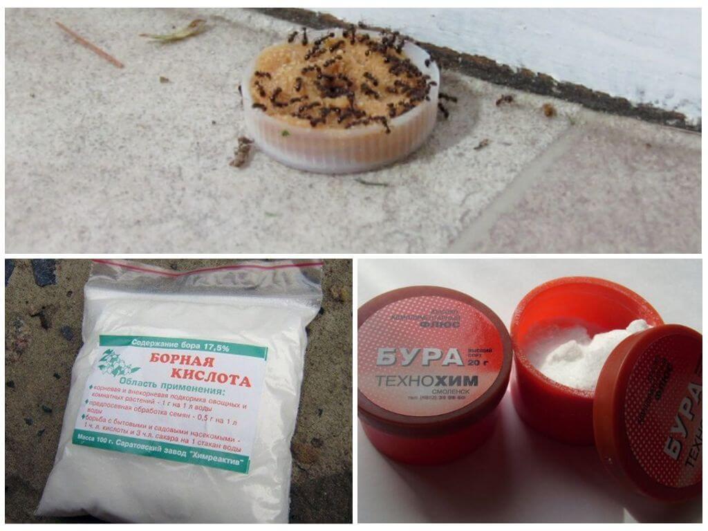 Борная кислота от муравьев – простые рецепты и эффективные советы