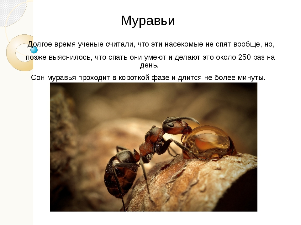 Жизнь муравьев в природе