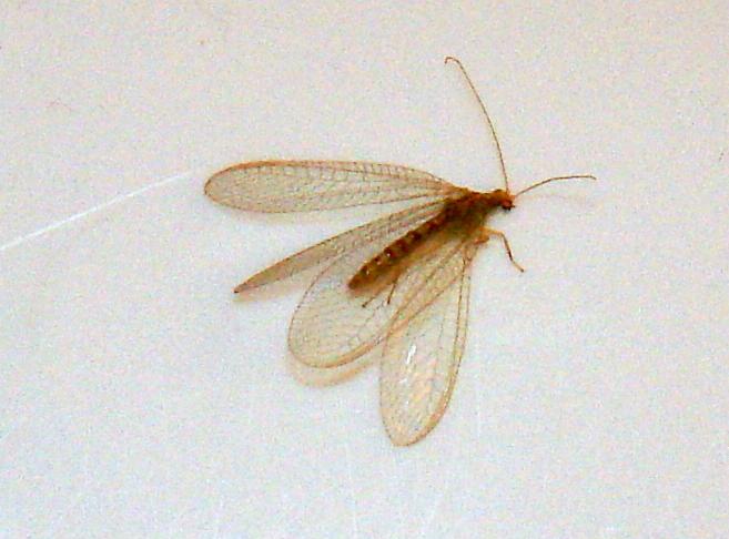 В квартире насекомое похожее на таракана - как распознать и что делать