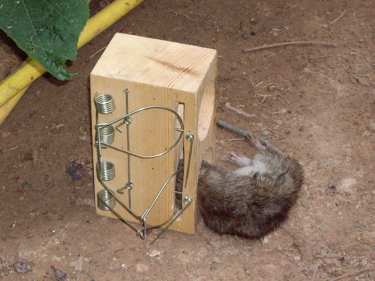 8 cамодельных ловушек от мышей