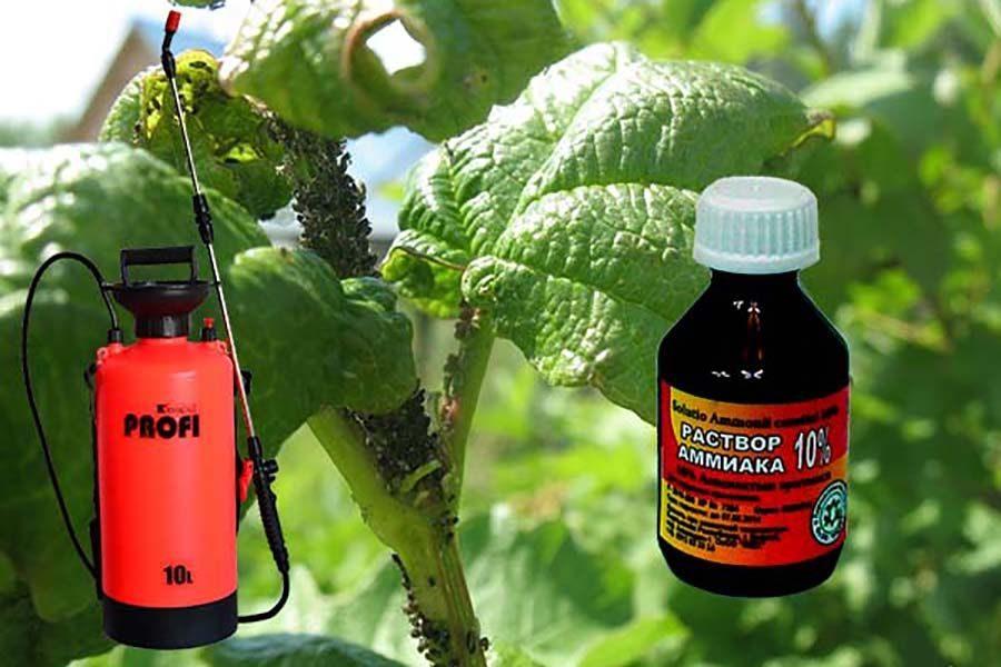 Как избавиться от тли на садовом участке и в огороде: эффективные методы борьбы