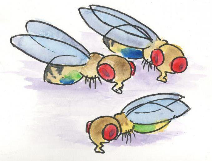 Мошки: описание, виды, как от них избавиться в домашних условиях, где обитают, чем питаются, насколько опасны для человека