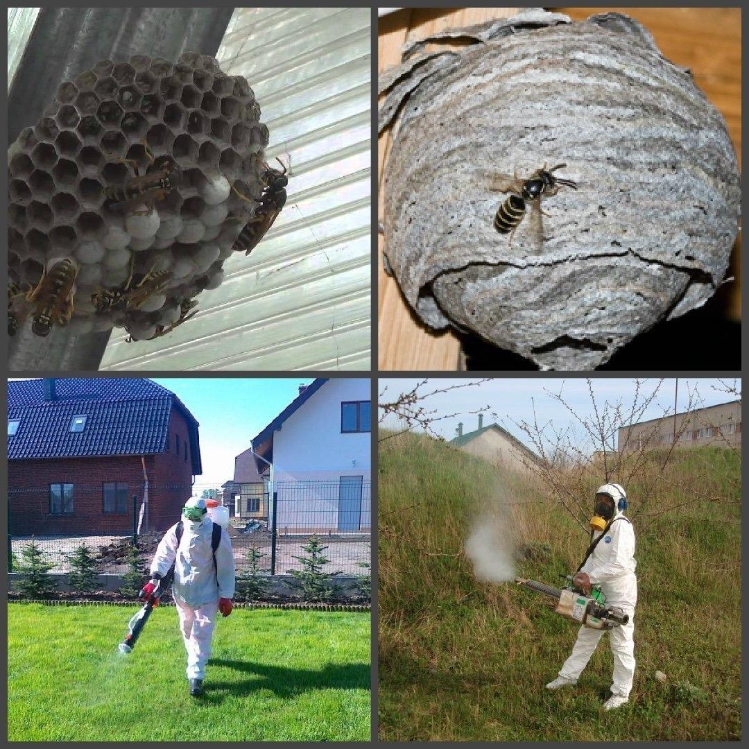 Как бороться с шершнями на даче и дома: как вывести и как предотвратить нежелательное соседство с шершнями