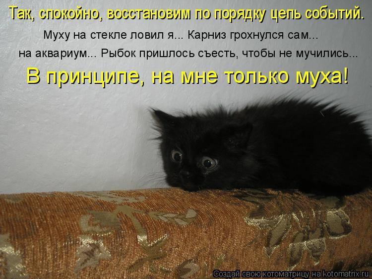 Кошка ест мух: последствия, причины повышенного интереса