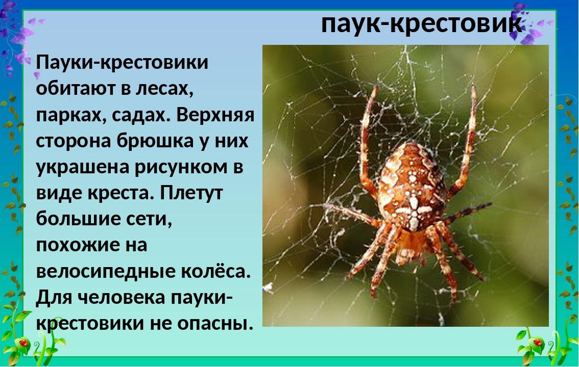 Строение паука-крестовика: внешние и внутренние особенности, образ жизни