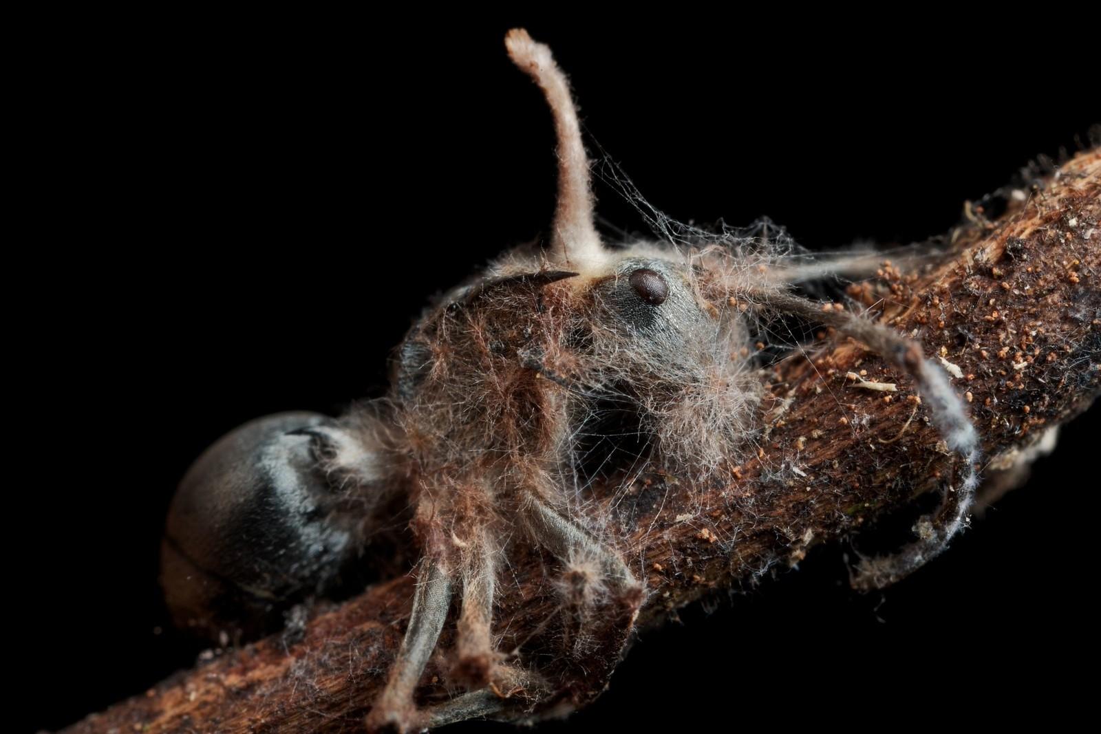 Грибы-патогены: как паразиты уничтожают растения – ответы на главные вопросы