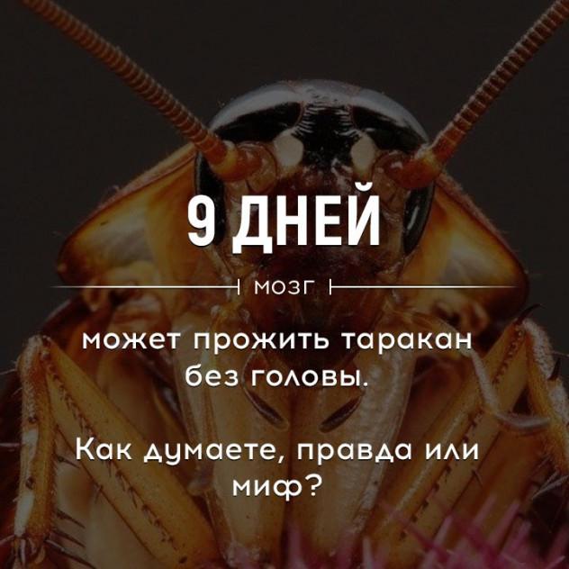 Сколько может прожить таракан без головы?