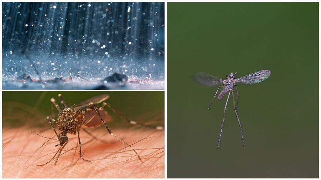 Комары: откуда появляются на свет