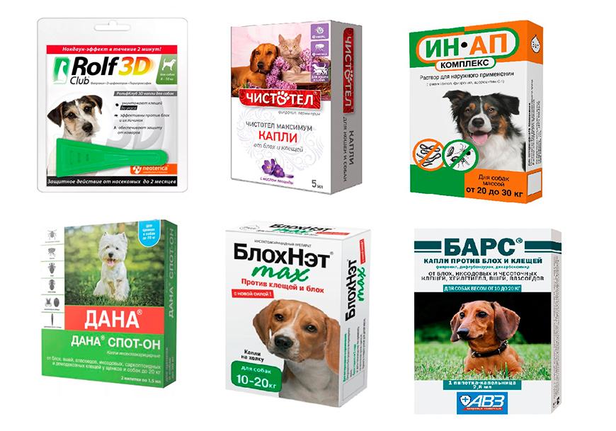 Капли, спреи и другие средства от клещей и блох для собак — как выбрать, какие лучше