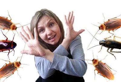 Чего боятся тараканы в квартире: как отпугнуть и вывести вредителей
