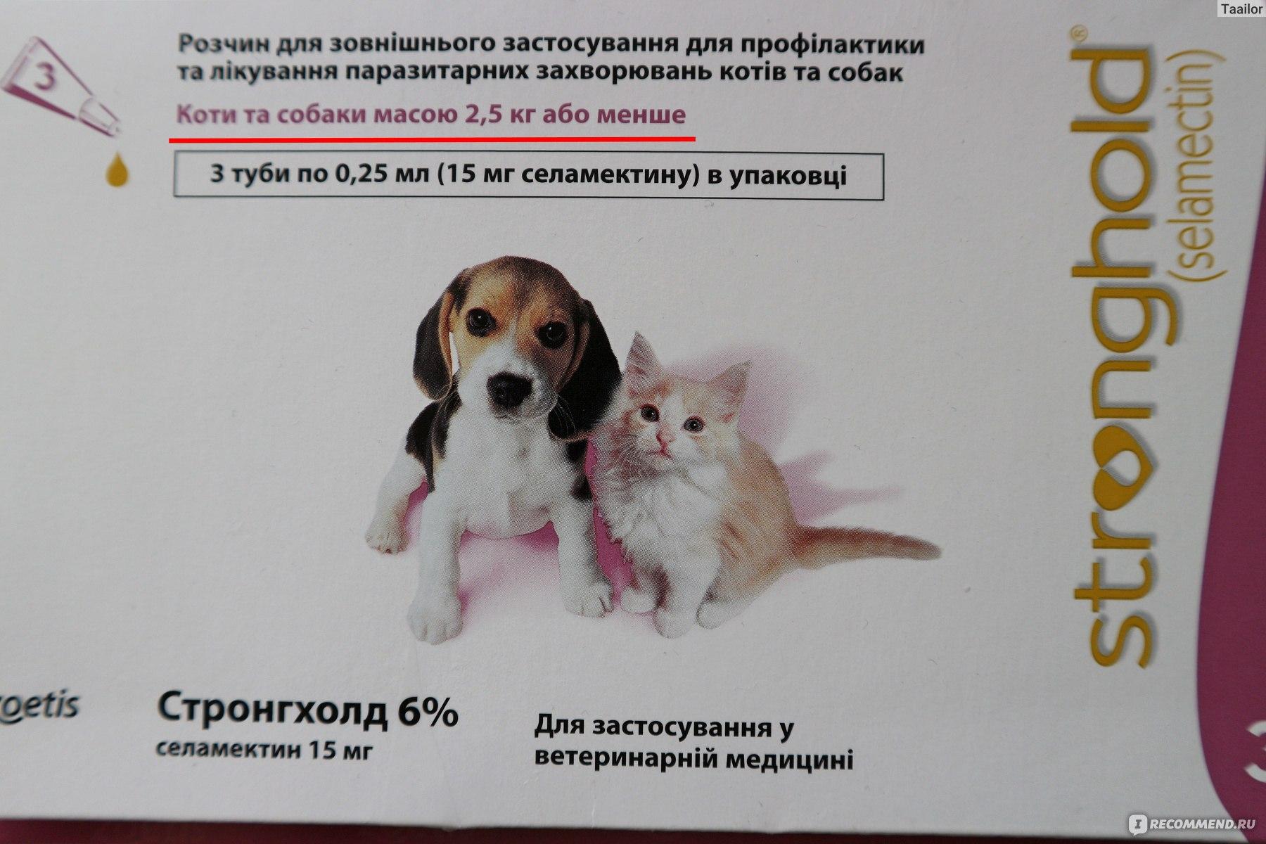 Прививки против клещей для собак: насколько эффективна вакцинация против инфекционных заболеваний