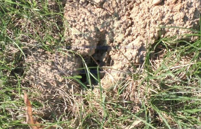 Как бороться с водяной крысой на огороде, наносимый вред
