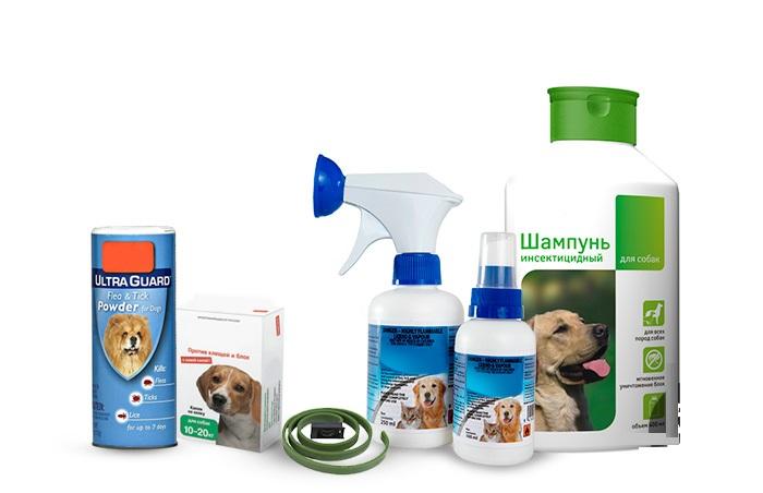Как избавиться и чем обработать собаку от блох в домашних условиях