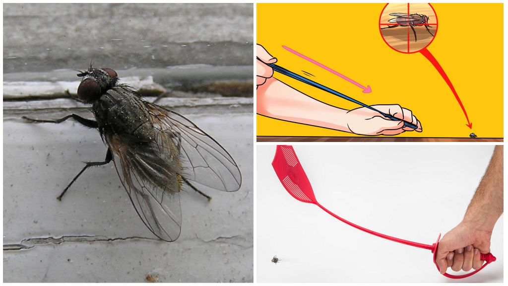 Как избавиться от мух в доме народными средствами